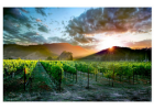 Wine Country Sunset Print